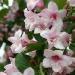 050421-bloem-0983