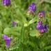 050421-bloem-0986
