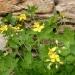 050421-bloem-0989