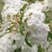050421-bloem-1008