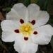 050421-bloem-1017