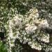 050421-bloem-1020