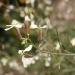 050421-bloem-1022