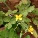 050421-bloem-1034