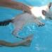 P1040014 poes leert zwemmen