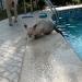 P1040022 poes leert zwemmen