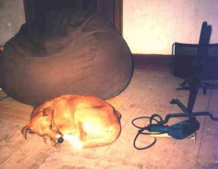 Hond bij zitzak