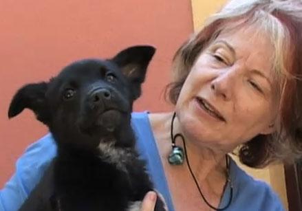 Eén van de puppies die een nieuw baasje zoeken.