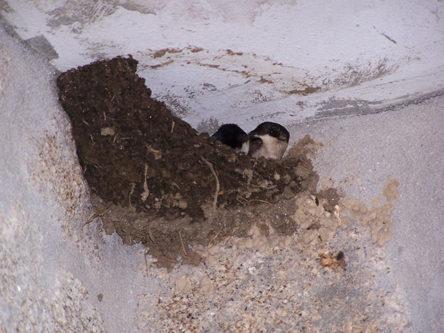vogelnestje op het balkon