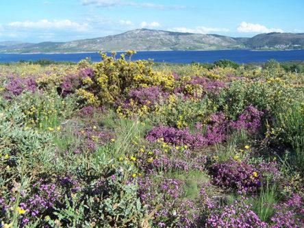 bloemen bij stuwmeer in Noord Portugal