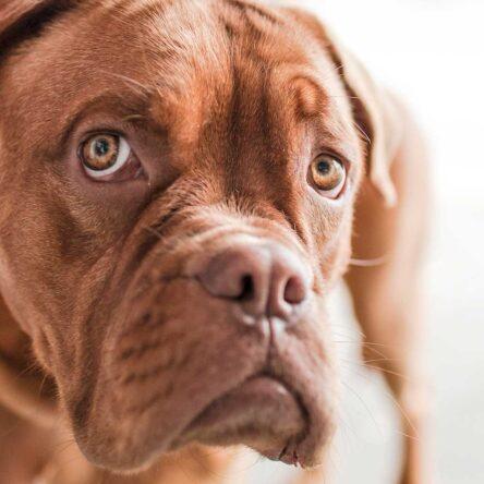 Een hondenleven in Portugel