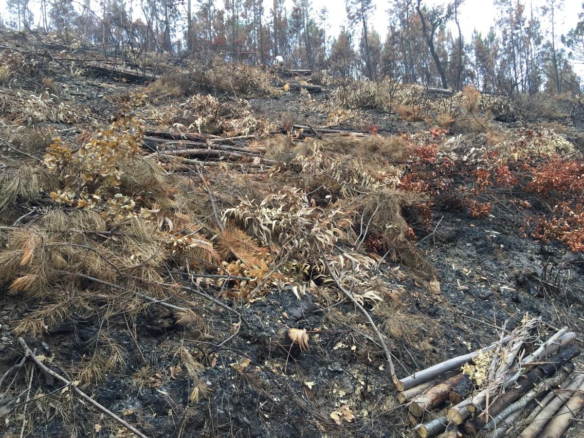 De verbrand bomen worden gekapt.