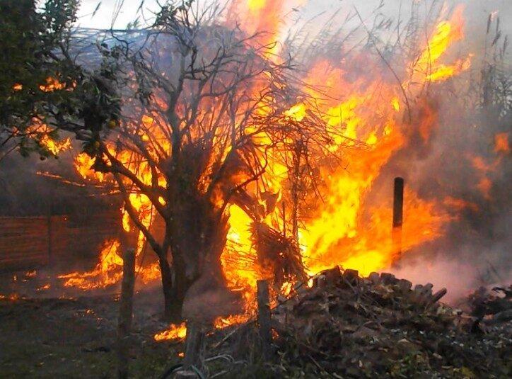 een-fel-brandend-bos