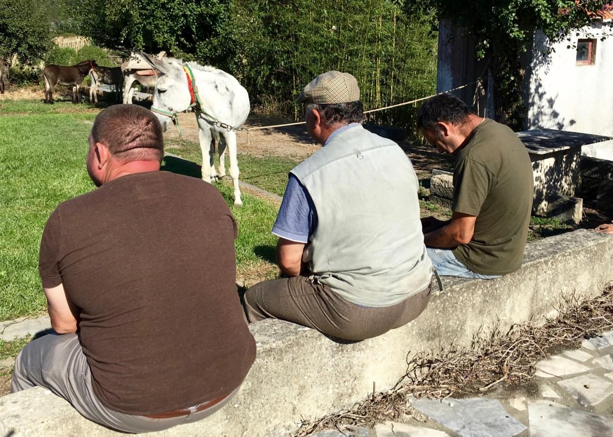 Drie eigenaars met hun ezels voordat de ezelrace begint