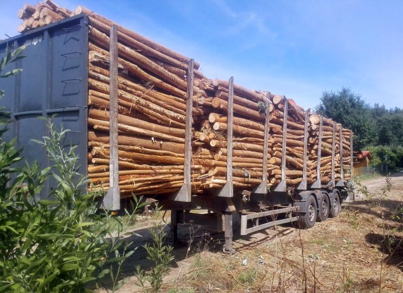 Eucalyptusbomen op een aanhanger