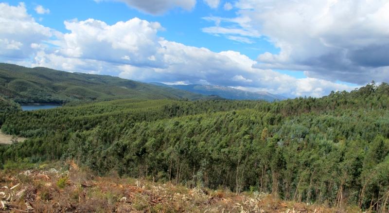 Eucalyptus plantage bij de rio Criz