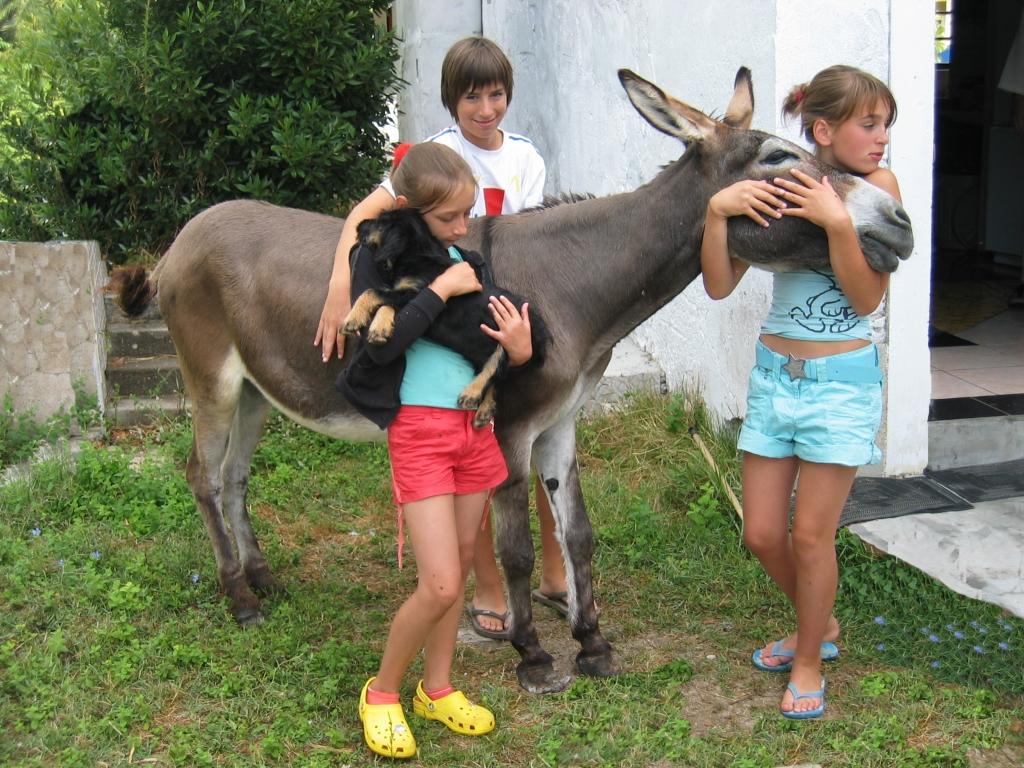 kinderen met een hondje en een ezel
