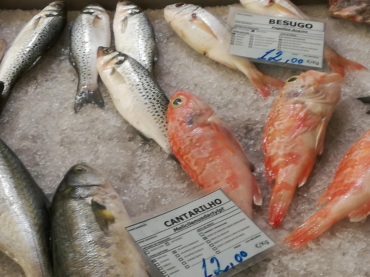 Verse vissen op een laagje ijs op de markt in Tavira. Cantarilho, robalo en besugo.