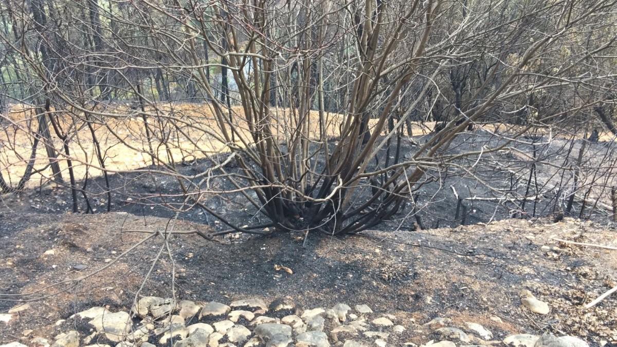 Een deel van onze tuin, na de brand