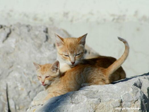 2 katten