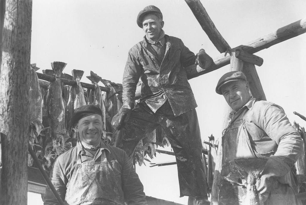 Een oude zwart-witfoto toont drie arbeiders bij een houten stellage waaraan stokvis te drogen hangt.