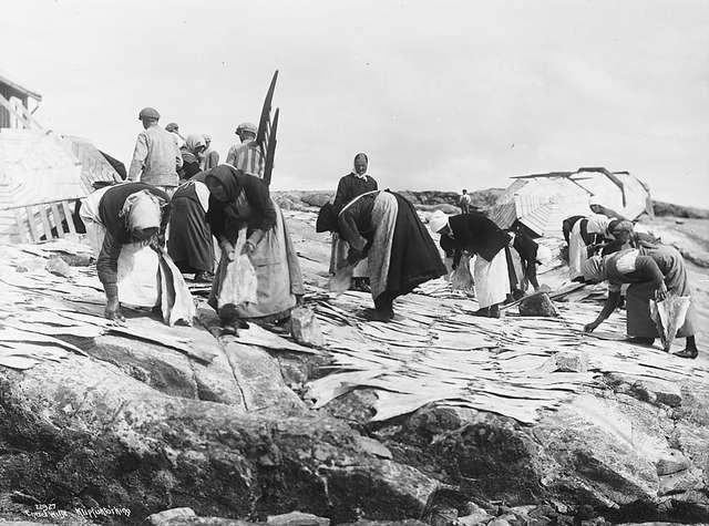 Een zwar-witfoto uit 1922 toont vrouwen die vis te drogen leggen op de rotsen van Kristiansund in Noorwegen.