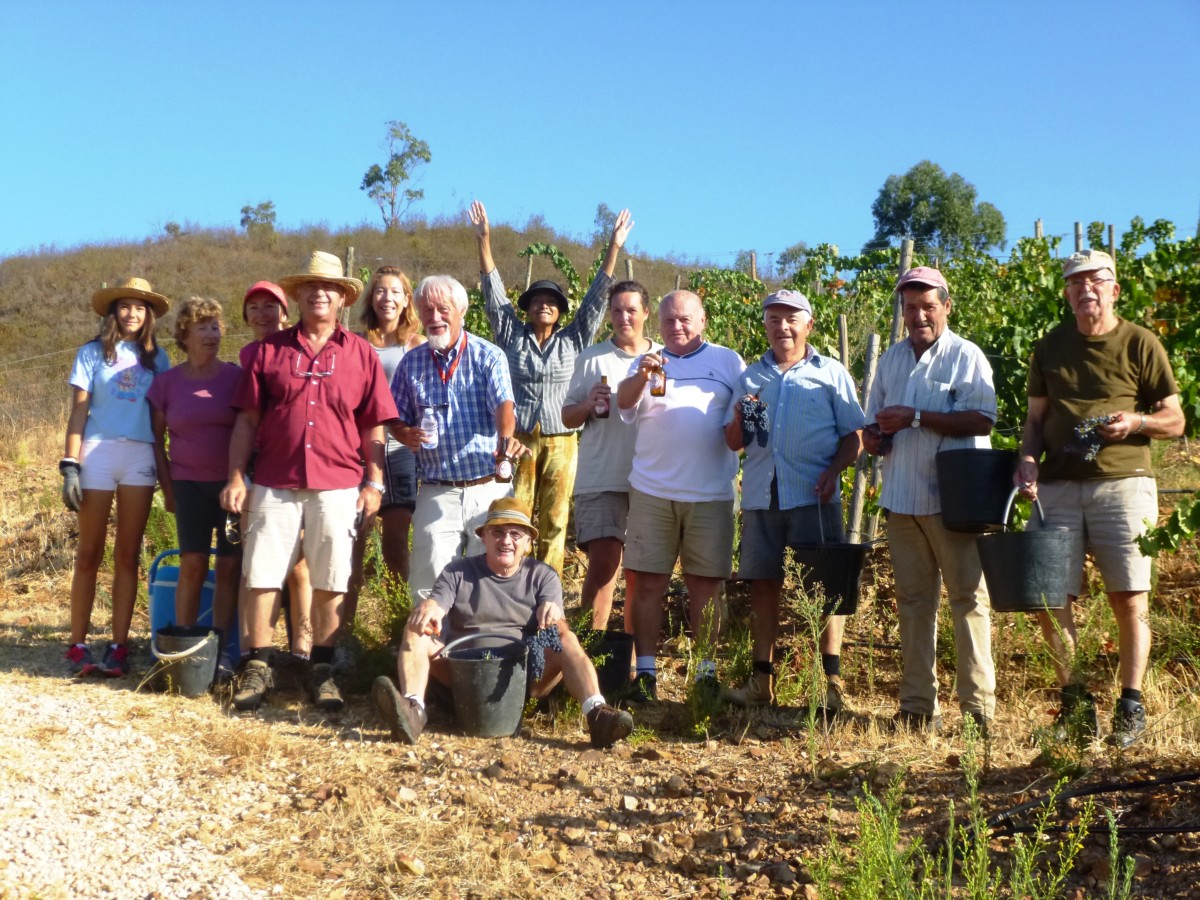 Druiven plukken wijnoogst Algarve Portugal