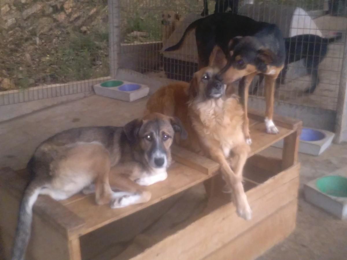 honden opvang Portugal