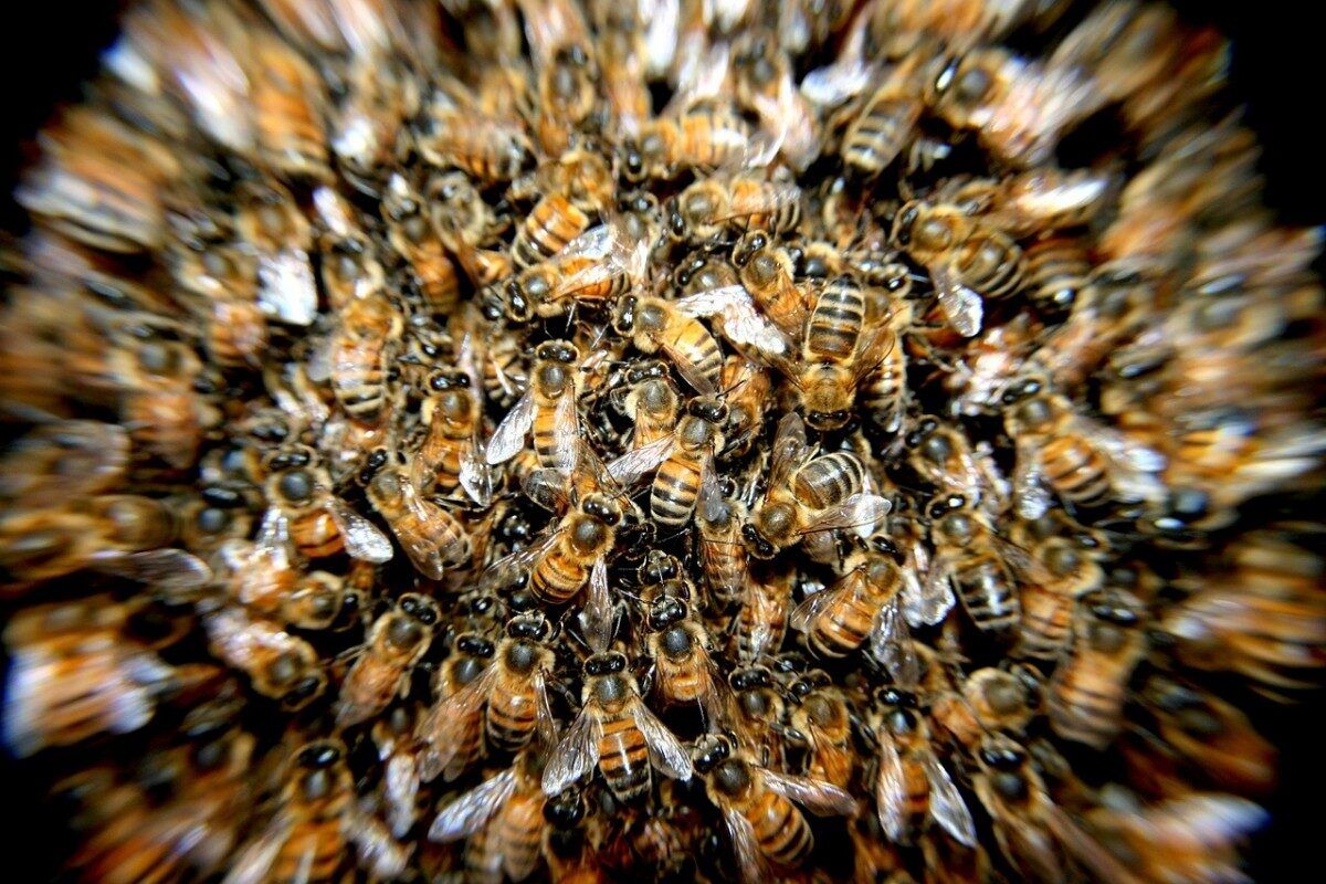 een zwerm bijen
