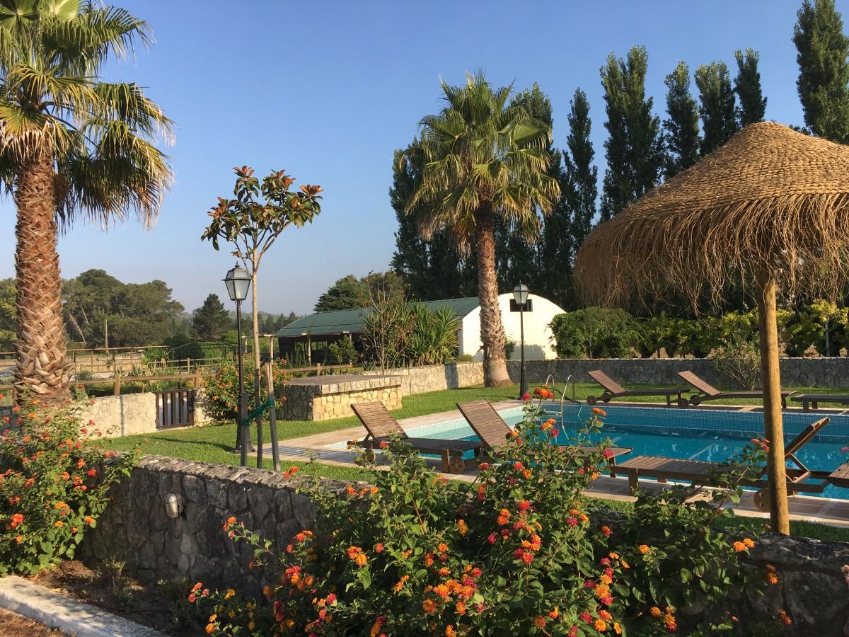 Tuin met zwembad, ligstoelen, palmen en parasol