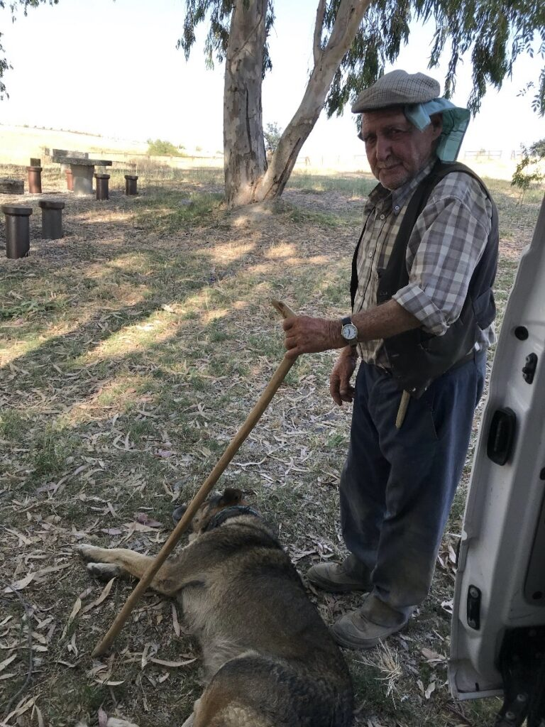 herder met hond