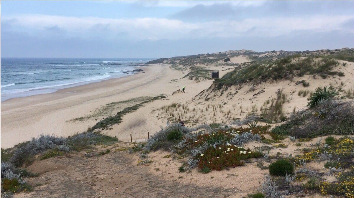 Strandblik met zandduinen