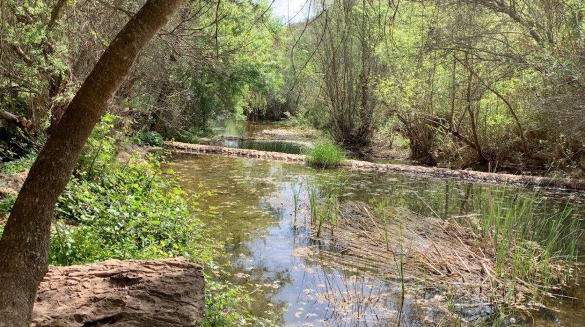 Blik over de waterloop omringd door weelderige vegetatie